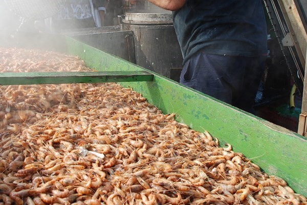 Fishing company Cornelis Vrolijk acquires an interest in Garnalenpelcentrum Kant